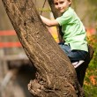 Royalty-Free Stock Photo: Boy climbing in trees