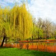 Stock Photo: Park with willows and water