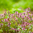 Bunch of purple flowers outdoor - Stock Photo