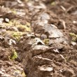Plough soil — Stock Photo