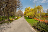 Park with willows and water — Stock Photo