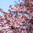 Little spring flowers in a tree — Stock Photo