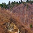 Stock Photo: Golden forest on mountain