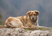 Stray dog portrait — Stock Photo