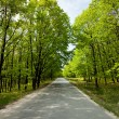 Stock Photo: Empty road between trees