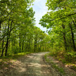 Stock Photo: Rural road through trees