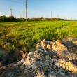 Dried mud and wheat field - Stock Photo