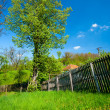Stock Photo: Linden tree
