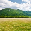 Landscape with dandelions field and mountains — Stock Photo