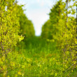 Winery, shallow focus - Stock Photo