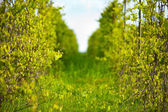 Winery, shallow focus — Stock Photo
