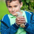 Holding baby chick — Stock Photo #3315947