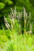 Plant straws — Stock Photo