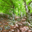 Old forest - Foto de Stock