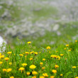 Dandelions — Stock Photo #3519018