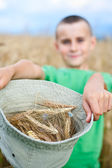Adorable child in a wheat field — Stock Photo
