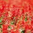 Red flowers in park - Stock Photo