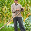 Old rural man using scythe - Stock Photo