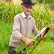 Old rural man using scythe — Stock Photo #3808839