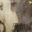 Tree Bark — Stockfoto
