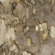 Tree Bark — Stock fotografie