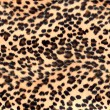 Leopard print — Stock Photo