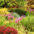 Colorful lush garden — Stock Photo