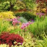 Colorful lush garden — Stock Photo #3424240