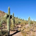 Arizona desert — Stock Photo #3458336