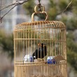 Bird in cage - Foto Stock