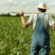 Farmer standing in a corn field - Stock Photo