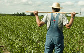 Farmer standing in a corn field — Stock Photo