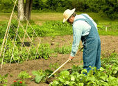 Man weeding his garden — Stock Photo