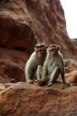 Two monkeys sitting prettily in diverse moods on a red rock — Stock Photo
