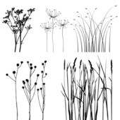 Collection, for designers, plant vector — Vector de stock