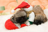Puppy in a santa hat — Stock Photo