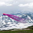 Stock Photo: Kites in sky