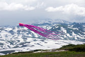 Kites in the sky — Foto Stock