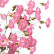 Pink flowers — Stock Photo #2819598