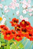 Achtergrond bloemen — Stockfoto