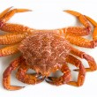 Crab (Erimacrus isenbeckii ) — Stock Photo