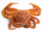 Crab (Erimacrus isenbeckii ) — Photo