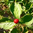 Foto de Stock  : Strawberry on foliage