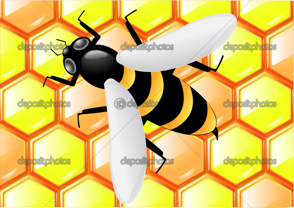 Bee on honeycombs background vector illustration — Stock Vector #3283734