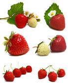 Blanco y rojo fresa y flor en la rama — Foto de Stock
