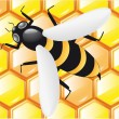 Stock Photo: Bee on honeycombs