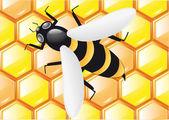 Abelhas em favos de mel — Foto Stock