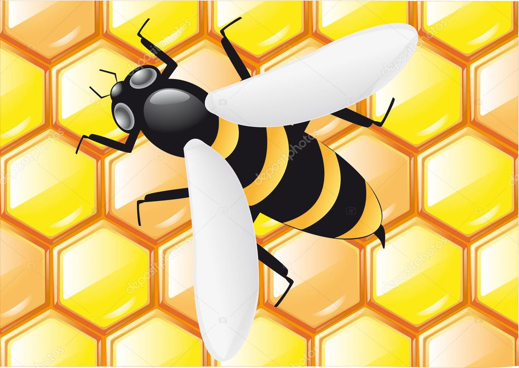 Bee on honeycombs background illustration — Stock Photo #3442475