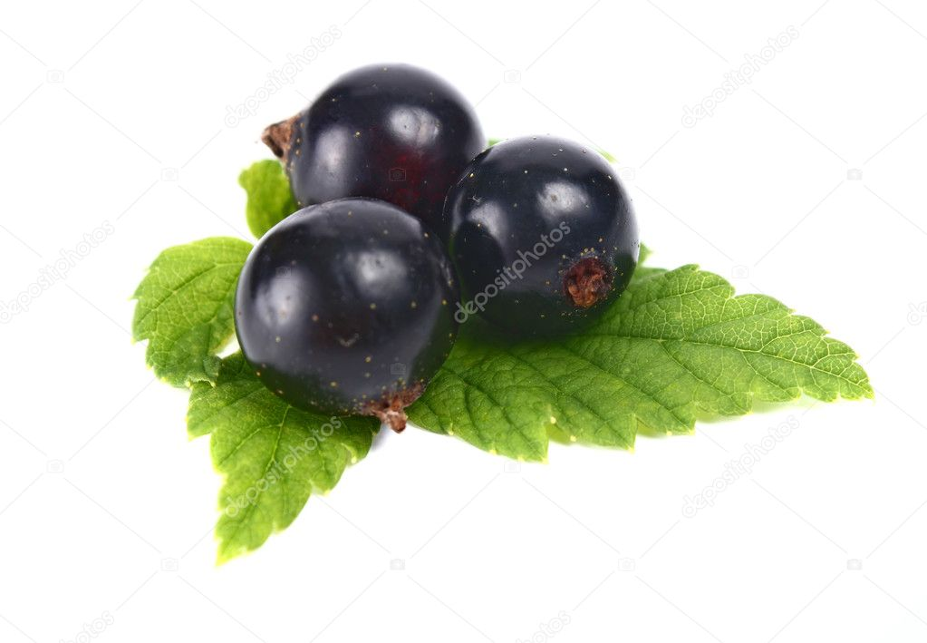 Black currants isolated on white background  Stock Photo #3477786