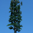 Pine tree cell tower - Stock Photo